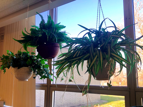 "House Plants ""Grow"" Healthy People"