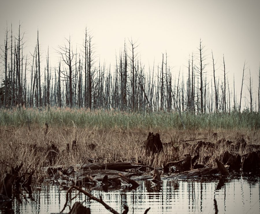 Bringing Ghost Forests Back To Life